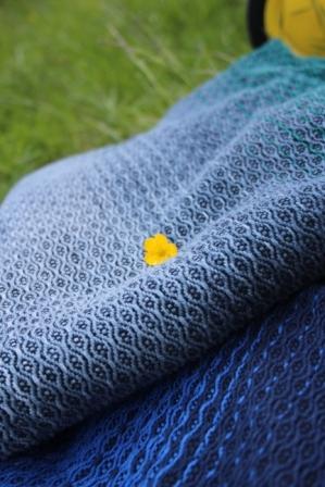 Die Webung im Kontrast zum Gelb einer Blume